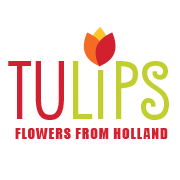 TULIPS - flowers from Holland